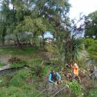 Te Kakano volunteer Anna Brent (far left) works beside Queenstown Lakes District Council parks...