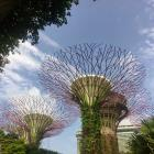 A canopy of solar-powered ''super trees'' at Gardens by the Bay. PHOTOS: FREDERIQUE GULCHER