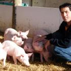North Otago farmer Ian Carter has stepped down as chairman of New Zealand Pork. PHOTO: ODT FILES