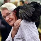 Poultry judge Alf Woods  gets up close and personal with this year's best bird in show, a black...