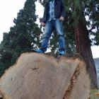 Paul Sewter is calling for ideas about how the timber from this felled English oak tree can be...