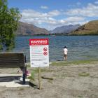 Signs at Lake Hayes in February warning of cyanobacteria. Photo: Tracey Roxburgh