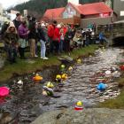 A big crowd gathered on the Village Green to watch hundreds of decorated ducks float down Horne...