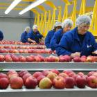 Workers at a packhouse in Ettrick process apples. Horticulture New Zealand is consulting on...