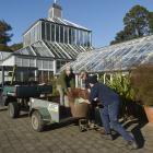 Dunedin Botanic Garden winter garden glasshouse curator Stephen Bishop (left) is given some...