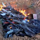 Some of the crocodile carcasses are burned by government authorities in Sorong regency, West...