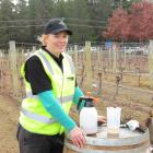 Annabel Bulk, of Felton Road Wines, takes a breather shortly after finishing the BioStart...