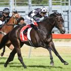 Seven time group 1 winner Kawi has been retired from racing. Photo: Race Images