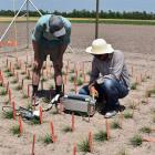 AgResearch scientist Dr Luke Cooney (left) and one of the United States scientists measure...