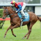 Cambridge-trained  filly Te Toro Pearl will be aiming for her fourth consecutive win when she...