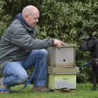 Rene Gloor with a new recruit, Cole, who is being trained to sniff out American foulbrood in bees...