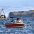 A recreational fishing boat and a commercial trawler near Cape Saunders at the weekend. PHOTO:...