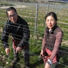 Yoshiaki and Kyoko Sato, of Cromwell, are looking forward to their first vintage from their Sato...