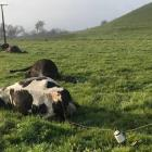 In March this year Northpower disconnected a service line to an old cowshed at a Dargaville...
