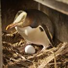 Photo: Penguin Rescue