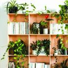 Books and indoor plants. Photos: Supplied