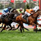 Popular Otago-bred stayer Who Shot Thebarman has been scratched from the Melbourne Cup. Photo:...
