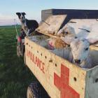 Wrey's Bush farmer Bradley Stewart uses his ''Lambulance'' as a way to transport animals around...