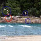 A drone was spotted at Whangamata Estuary earlier this month being flown close to six dotterels....