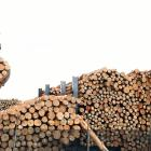Rising US-China trade tensions are casting a shadow over the short-term outlook for log exports;...