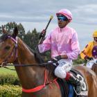 Zubair Bholah brings Flicka Of Gold back to the winner's circle at Wingatui yesterday. Photo:...