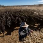 Ambrose Doolan at work on his drought-hit farm outside Coonabrabran in New South Wales. Photo: Getty