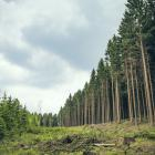 Plantation forests can intercept rainwater and evaporate back to the atmosphere more than pasture...