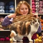 Emma Chaney (6) displays the blanket she knitted for her cat Amber. Photo: Peter McIntosh