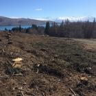 Trees have also been cut down near the Tekapo walkway.