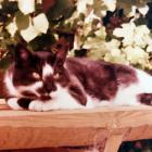 Smudge was our family cat in the 1970s and '80s, the biggest softie I've ever met. He is much...