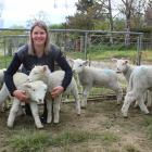 Kelly Liggett at home at her Clifton farm with just a few of her lambs she is hand-rearing. Photo...