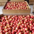 The horticulture sector was down 4.3% in October, undermined by apple prices, which fell 15.2%. ...