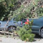 Cordons have been put into place on Victoria Ave after a tree fell onto cars in Invercargill...