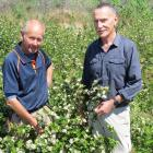 Trial plantings of aronia berries seem successful and may well prove commercially viable....