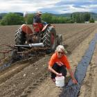 Darryl Peirce, of The Pumpkin Place, near Millers Flat, lays plastic in rows, while Raewyn...