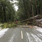 Trees falling on to power lines in bad weather are a frequent cause of power outages in the...
