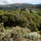 Looking across to Flagstaff, also part of the Dunedin volcano, from the Mediterranean garden....