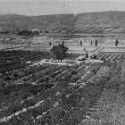 An orchard in full bearing at Coal Creek Flat. - Otago Witness, 11.12.1918.