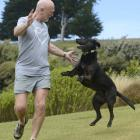 Meg is back on all-fours, playing with owner Andy Cunningham at their Purakaunui home. PHOTO:...