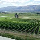 Ostler's ''Clos Ostler'' vineyard in the Waitaki Valley, with underlying limestone and alluvial...