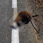 A local has been left in disbelief after he discovered the roadkill outside his home was painted...
