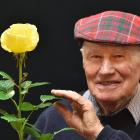 Dunedin resident Bob Grant (89) with his ''Champion of Champions'' rose bloom Glorious, at the...