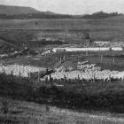 Sheep dipping: the dipping yards at Totara, North Otago. - Otago Witness, 18.12.1918.