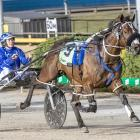 Spankem is set to start favourite for tomorrow's Interdominion Pacing Final in Melbourne.PHOTO:...