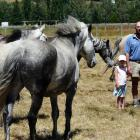 Lawrence Rodeo Club president Murray Hellewell inspects the outlaw broncs with daughter Riley (5)...