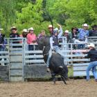 Second division bull ride champion Darryl McPherson, of Putaruru, gets off to a bumpy start....