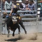 Omarama cowboy Wyatt McAughtrie rides Ace of Spades at the Omarama Rodeo yesterday.