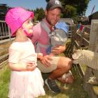 Leila Pewhairangi (3), of Queenstown, meets a prize-winning sheep at the Lake Hayes A&P Show...