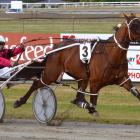 Sagwitch (Mark Hurrell) scores an upset win in the Summer Cup at Ascot Park yesterday. PHOTO:...