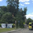 Fire and Emergency NZ said two fire crews are currently working to free a person trapped under a...